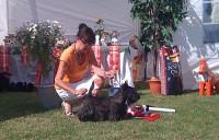 July 2-5 2008, World Dog Show