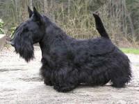 Tristan BIS-Puppy